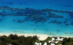 BermudaReefs (Large)